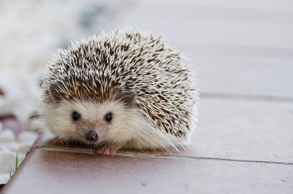 Was ist IGel?